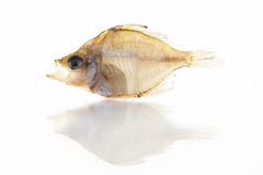 Высушенная рыба изолированная на белой предпосылке Стоковые Фото