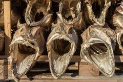 Высушенная рыба трески возглавляет с большими открытыми ртами Стоковая Фотография RF
