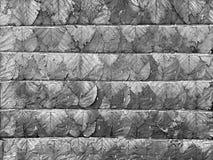 высушенная текстура листьев Стоковые Фотографии RF