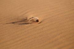 Высушенная трава в дюне Стоковое фото RF