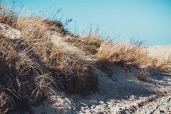 Высушенная трава в песчанных дюнах Стоковые Фотографии RF
