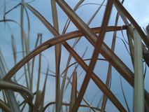 Высушенная трава на фоне ясного неба стоковая фотография