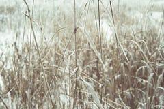 Высушенная трава с заморозком Стоковое фото RF