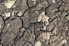 Высушенная треснутая грязь и желтые листья, предпосылка стоковое изображение