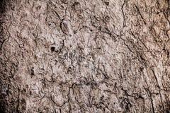 Высушенная треснутая почва Стоковое фото RF