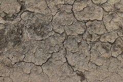 Высушенная черная почва Стоковое Изображение