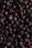 Высушенная черная смородина Стоковое Фото