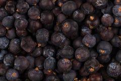Высушенная черная смородина Стоковые Фото