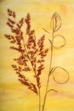 высушенная backgroun трава фантазии Стоковые Изображения