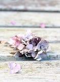 Высушенное бледное - розовые цветки hyrdragea Стоковое Изображение RF