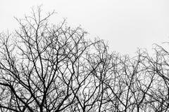 Высушенное дерево Стоковое Фото