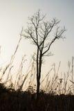 Высушенное дерево Стоковые Изображения RF