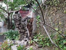 Высушенное мертвое дерево Стоковое Фото