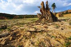 высушенное поле Стоковая Фотография