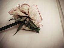 Высушенное розовое подняло (винтажное влияние) стоковые фотографии rf