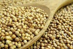 Высушенное семя кориандра стоковые изображения rf