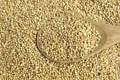 Высушенное семя кориандра стоковое фото rf