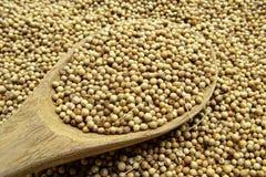 Высушенное семя кориандра стоковые фото