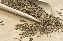 Высушенное семя фенхеля Стоковое Фото