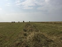 Высушенное сено поля Стоковая Фотография