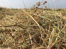 Высушенное сено поля Стоковые Изображения