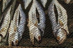 высушенное солнце рыб Стоковые Изображения
