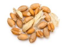Высушенное ухо пшеницы Стоковые Фотографии RF