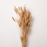 Высушенные ветви пшеницы Стоковая Фотография