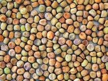 Высушенные горохи семени Стоковые Изображения