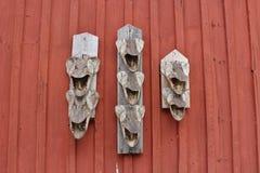 Высушенные головы щуки Стоковые Фотографии RF