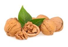Высушенные грецкие орехи при изолированные листья Стоковые Изображения RF