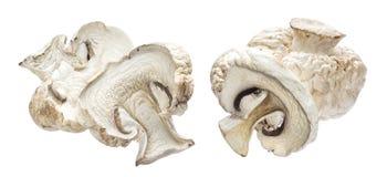 Высушенные грибы изолированные на белой предпосылке стоковая фотография