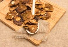 Высушенные грибы на холсте Стоковые Фотографии RF