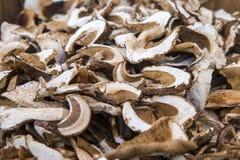 Высушенные грибы плюшки Пенни Стоковые Изображения RF