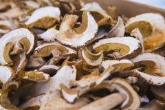 Высушенные грибы плюшки Пенни Стоковое фото RF