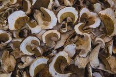 Высушенные грибы плюшки Пенни Стоковые Фото
