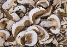 Высушенные грибы плюшки Пенни Стоковое Изображение RF