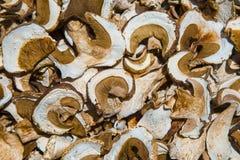 Высушенные грибы плюшки Пенни Стоковое Изображение
