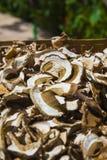 Высушенные грибы плюшки Пенни Стоковая Фотография