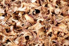 высушенные грибы Стоковая Фотография RF