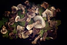 высушенные грибы Стоковое Фото