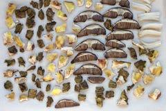 Высушенные грибы porcini на деревянном столе еда вареников предпосылки много мясо очень Деревенский тип Стоковая Фотография