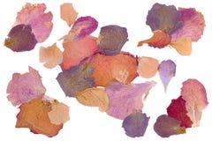 Высушенные лепестки розы цветка Стоковая Фотография RF