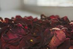 высушенные лепестки цветка Стоковое Фото