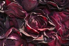 высушенные лепестки цветка стоковые изображения