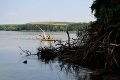 Высушенные деревья на Дунае (2) Стоковые Фото