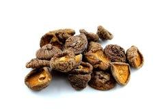 Высушенные изолированные грибы шиитаке Стоковые Изображения