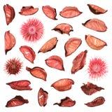 Высушенные изолированные листья potpourri смеси Стоковая Фотография RF