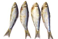Высушенные изолированные рыбы Стоковые Изображения