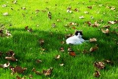 Высушенные листья в лесе Стоковое фото RF